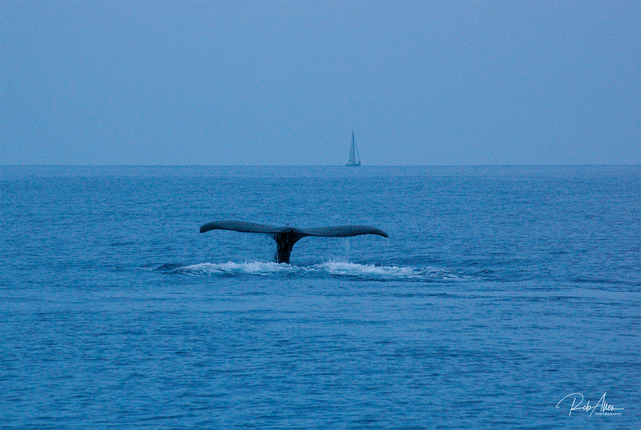 20080424_WhaleTailSailboat-0411