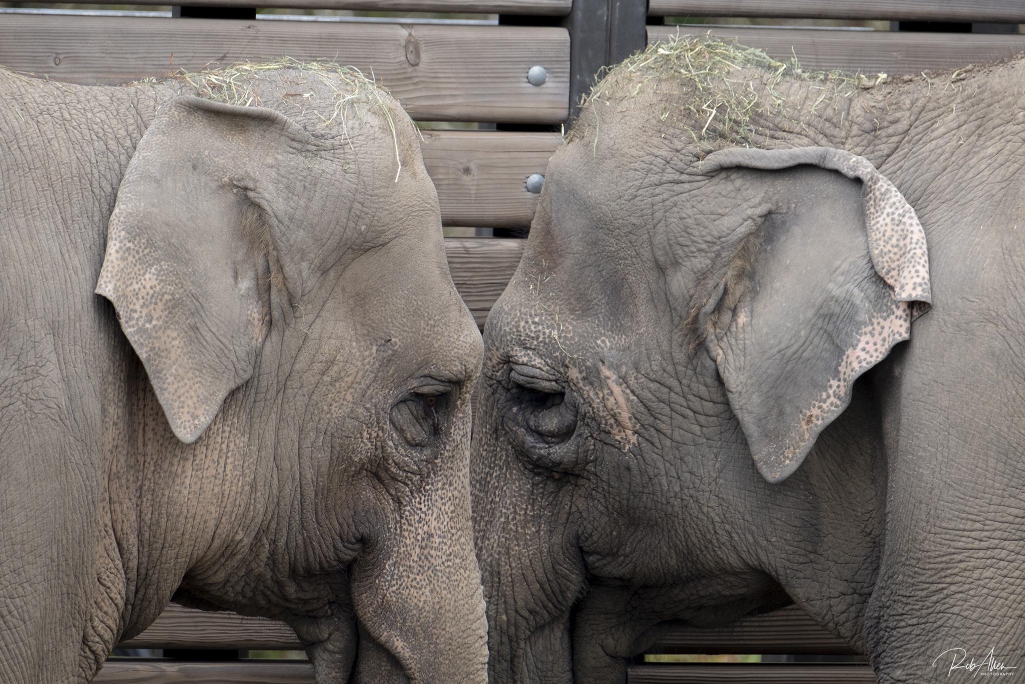 20190218_ElephantsHangin