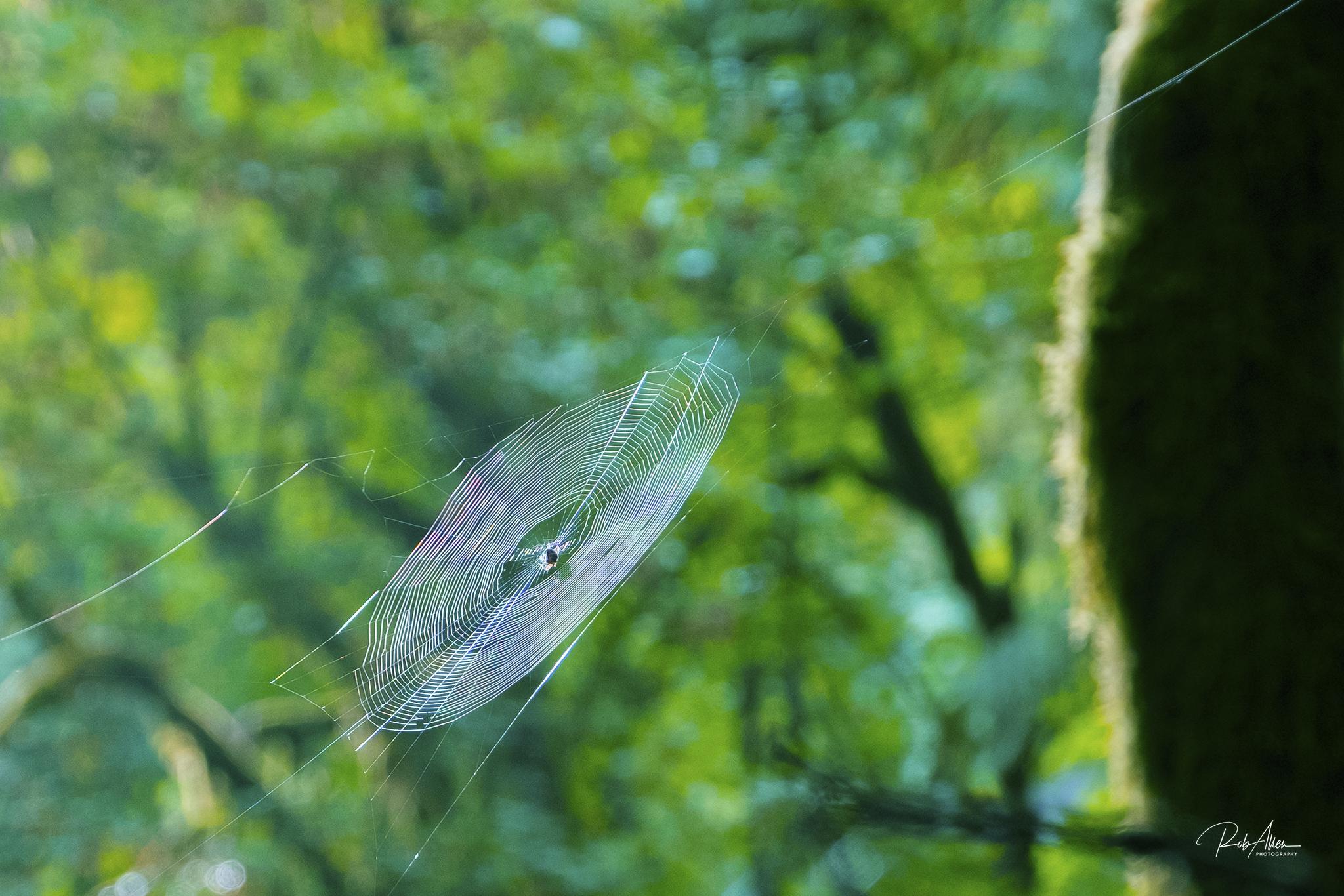 20190811_SpiderWeb-1620
