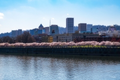 20200321_PDXBlossoms-6607
