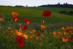 20200525_Flowers-n-wine-7451